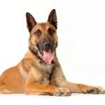 erstatning hundebid