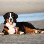 strandhunden