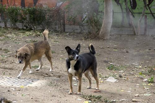 aflivning af herreløse hunde