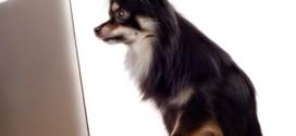 Efterlysning af hund