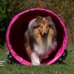 Hundesport mod cancer