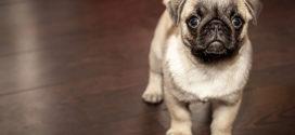 Smiley-ordning til hundekenneler