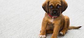 Fokus på sagsbehandlingstiden i dyreværnssager