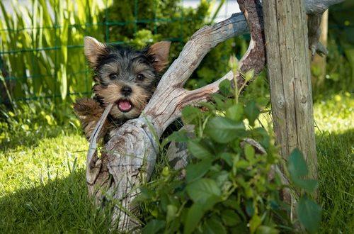 Tre idéer til påskehygge med din hund