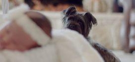 Kæledyr forebygger allergi – jo flere, jo bedre
