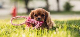Mange hundekenneler, -internater og -pensioner har fået en glad hundesmiley