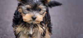 Fødevarestyrelsen opfordrer hundeejere til at være varsomme med hundegodbidder